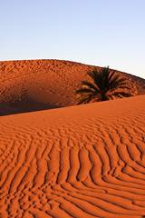 Bougeorn, Morocco (kathyc73) Tags: sahara desert dune morocco