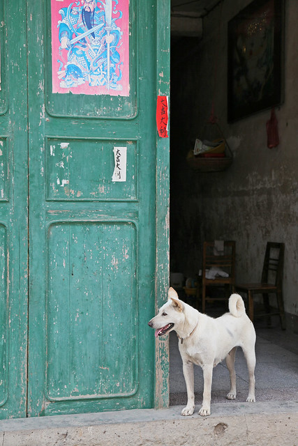 A dog in front of old green door in Xingping, Guangxi, China