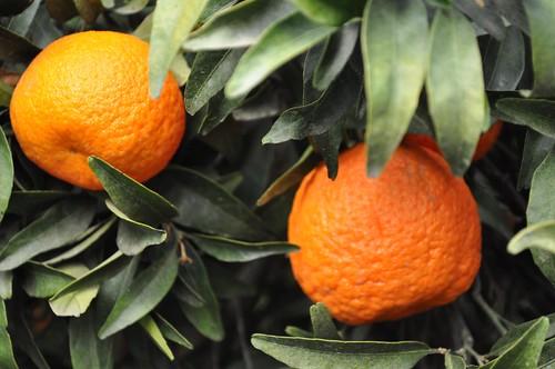 dark orange orange