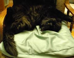 Cozy Mocha (sweetp_sqrd) Tags: catnipaddicts