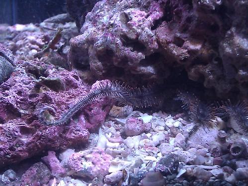 Starfish prime! BiL's new salt tank is pretty awesome.