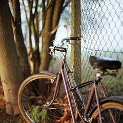 Autumn Bicycle (Kenneth Ipcress) Tags: morning autumn mist london 120 6x6 film bike bicycle fog mediumformat wideopen gunnersburypark norita norita66 autaut 80mmf2 noritar kennyip
