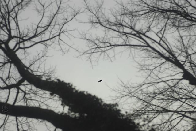 birdaway