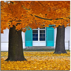 The azure shutters (Nespyxel) Tags: autumn trees berlin leaves foglie alberi colours azure shutters autunno azzurro berlino persiane stefanoscarselli saariysqualitypictures