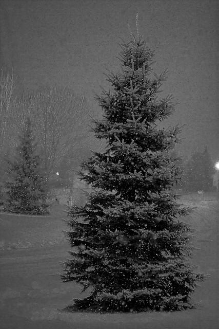 {329/365} evening snow