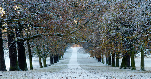 Early Snow in Nottingham's Wollaton Park