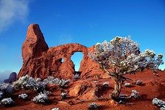 Turret Arch With Tree & Snow - Arches National Park, Utah. (Brian Callahan (Luxgnos.com)) Tags: snow tree utah archesnationalpark bushes turretarch briancallahan shinsanbc mygearandmepremium mygearandmebronze mygearandmesilver mygearandmegold mygearandmeplatinum mygearandmediamond luxgnosphotography luxgnosis wwwluxgnoscom