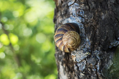 Tree Snail ! (Merwan Abo Photography) Tags: natural nikon iraq iraqi wildlife merwan merwanabo merwanmedhafermatty marwan exposure dream nature matti happy cute bokeh color cool modhafer photography abo arabic animal animals abstract baghdad landscape d7000 medhafer good nikkor مروان المصور العراق الفرات العراقي عبو العربي نيكون اللوان بوكيه حلزون snail turkey bolu
