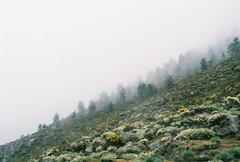 (Helena Costa.) Tags: fog serra da estrela portugal nikon f65 fujicolor mountains analog