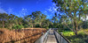 boardwalk2 WW panorama iphone 7 plus  IMG_0058_tonemapped (neilfif11) Tags: iphone7plus boardwalk warriewood sydney panorama wetlands