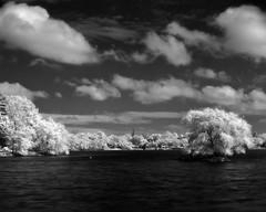 Redscape (Dr. RawheaD) Tags: sky cloud white black tree ir kodak infrared f25 graflex speedgraphic jamaicapond efke pacemaker aeroektar 178mm ir820
