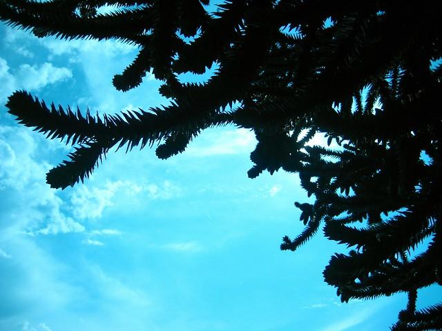 2010-07-28 tree 002
