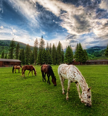 Horses on an Evening Meadow (Stuck in Customs) Tags: world ranch travel trees sunset wild sky horses horse usa west grass animal animals clouds barn digital america photography evening blog high montana dynamic stuck natural united north scenic meadow july processing western imaging states prairie relaxed range hdr grazing tutorial trey speckled travelblog customs 2010 fourhorsemen ratcliff hdrtutorial stuckincustoms fourhorses treyratcliff stuckincustomscom nikond3x