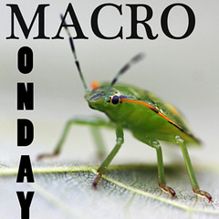 Macro Flowers Monday badge