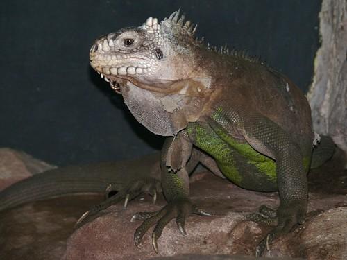 Flickriver Photoset Lepidosauria Schuppenechsen Scaled Lizards