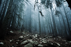 Sleepy Hollow (Dankish) Tags: wood blue mist cold misty fog forest dark scary menacing fear foggy creepy spooky jordan mysterious horror threat menace sleepyhollow yordan savov savoff dramaticforest
