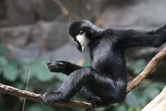 MNZoo 497 (tfangel) Tags: animals zoo minnesotazoo tropicstrail