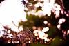 torrid (moaan) Tags: summer latesummer september heat terribleheat intenseheat lingeringsummerheat heatoflatesummer leica m8 leicam8 noctilux 50mm f10 leicanoctilux50mmf10 bokeh dof life inlife digital utata 2010 gettyimagesjapanq1 gettyimagesjapanq2