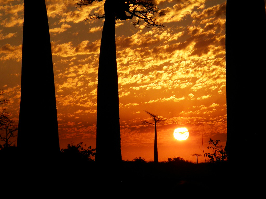 Sunset at Avenue of the Baobab