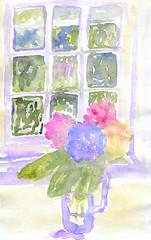 Blooming lovely! (Patsy Jennings) Tags: flowers art seaside cornwall watercolour hydrangeas boscastle paintedflowers