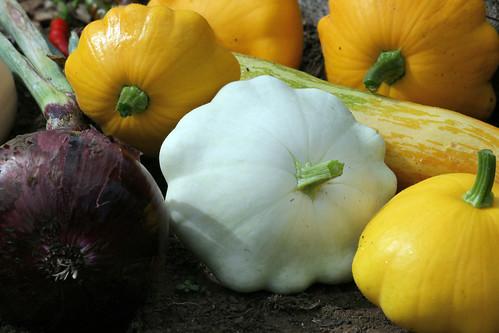harvest  077