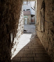 cat in Alley (Joe Aminoff) Tags: cat israel alley jerusalem courtyard