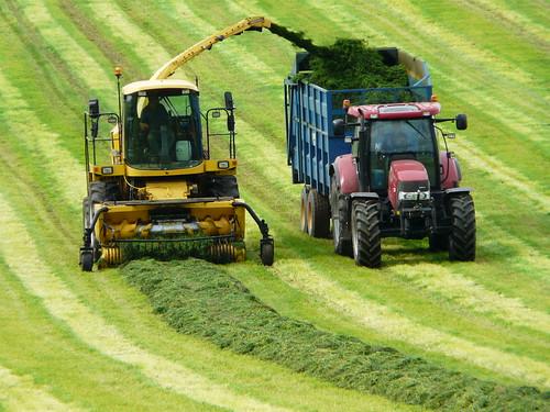 P1360014 Silage Harvesting