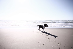 (gigi galiazzo) Tags: blue sea sky sand bullterrier gaas summerlove