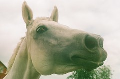 nosy (thinktank8326) Tags: horse chicago motion film barn pen nose grey illinois midwest perfect flickr mare play farm country gray ears blow nostril aurora pearl eyelash curious stable manualfocus equine mane bigrock snort chicagoland paddock turnout warmblood chicagosuburbs colorfilm farmette trakehner minolta303b parkoaks kremeroyale thinktank8326