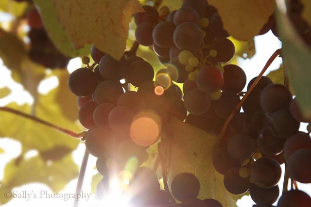 IMG_5883_2 sunlight.sm