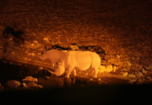 Ongava Black Rhino At Night