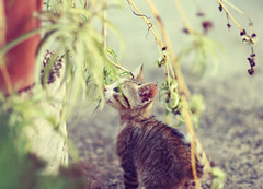 -curious cat- (Maria Dattola) Tags: plant cat canon  85mm curioso curious gatto micio pianta eos1000d mariadattola