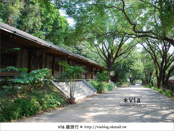 【彰化】彰化藝術高中~教室與森林結合的美麗校區8
