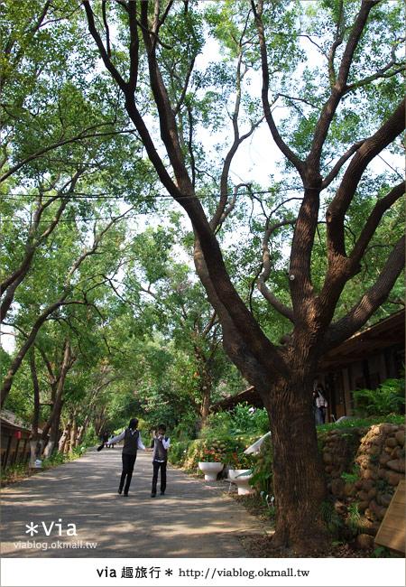【彰化】彰化藝術高中~教室與森林結合的美麗校區17