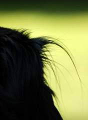 HAIR OF THE DOG (Irene2727) Tags: dog abstract hair neck fur head expression backlit  ugo magicalmoments creative mywinners nikond40 abokehoflight outbursts lovelymotherearth