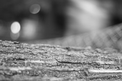 (Eric Bishop Photography) Tags: park wood trees blackandwhite color macro tree net love canon dead fun outside eos 50mm blurry focus peace play bokeh grain hipster cities peaceful happiness calm bark indie 365 mm grainy spiritual 50 quadcities xti 400d canoneos400d hispter canonseos400d