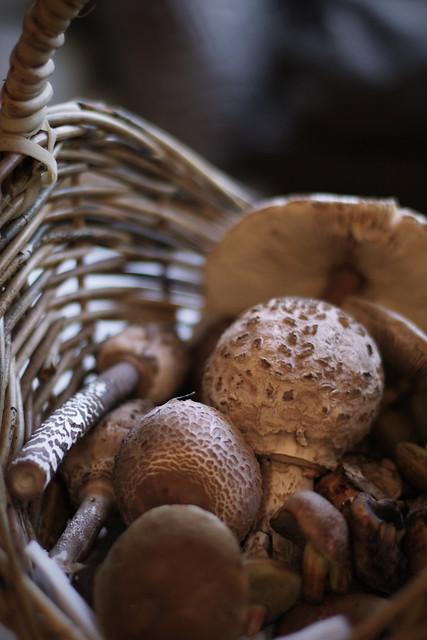 Mushroom booties