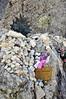 Targa per Lara e Massimo (mfortini) Tags: crema bocca bulli pezza picca ronca sassopiatto camminata forcellasassolungo