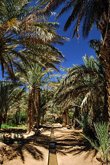 Oasis (mishka-cz) Tags: africa sahara water grass palms canal desert nikond70s oasis morocco gutter moroccan