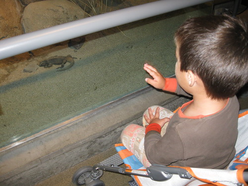 Finn waves to the chuckwalla at the Science Center