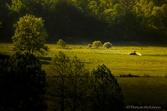 Making Hay While The Sun Shines (nailbender) Tags: tractor sunrise farming harvest agriculture cadescove smokiemountainnp