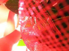 reti rosse