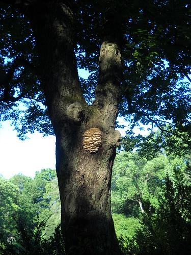 Longwood July 2010 123
