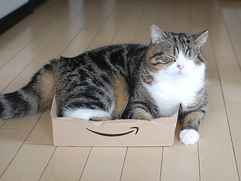 cute maru napping in a small box