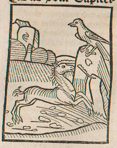 0218 De rinocerote et corvo