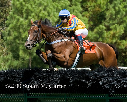 Rockon Rockoff steeplechase race horse