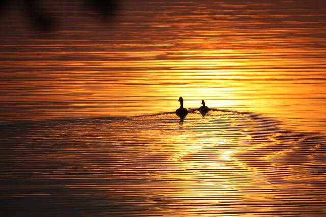 sunset ducks SOOC