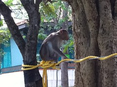 Monkey Waiting
