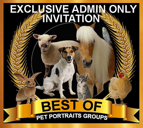 BEST OF Pet Portraits Invite Mixed Pets