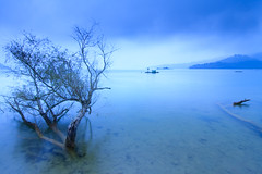 Tree of Mystery (samyaoo) Tags: sunrise taiwan    sunmoonlake